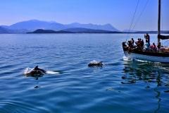 Αμβρακικος-ρινοδελφινα